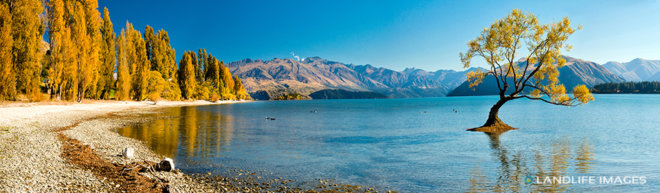 That Wanaka Tree in Autumn, Lake Wanaka
