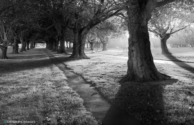 Hagley Park B+W, Christchurch, New Zealand