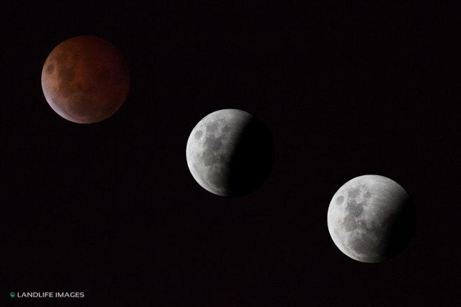 Blood Moon Composite as seen from Christchurch, New Zealand