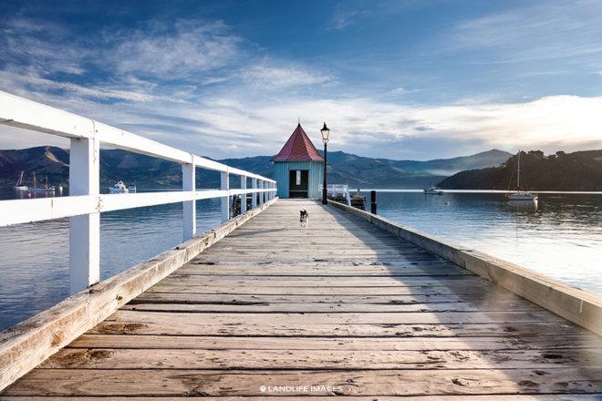 Small Dog, Big Wharf, Akaroa, New Zealand