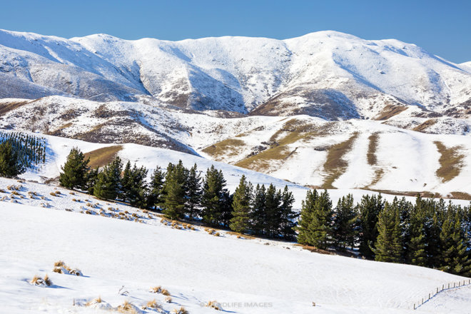 Otago Snowy Scenes, New Zealand