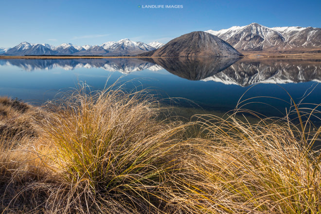 Lake Heron Reflections Beyond the Tussocks, Canterbury, New Zealand