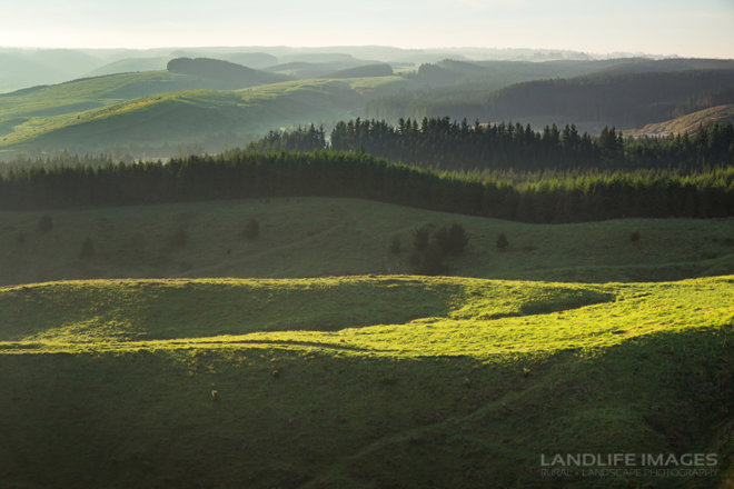 Farmland views at sunrise, Taupo, New Zealand