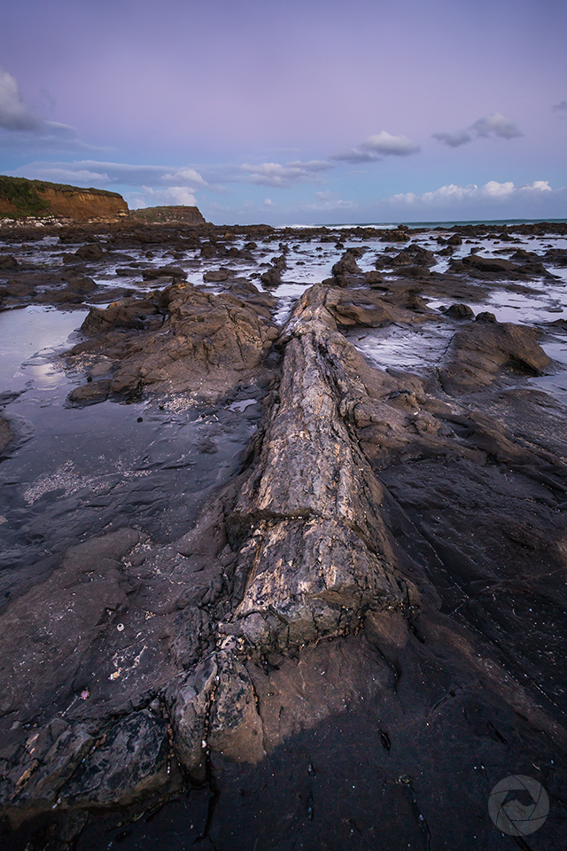 Petrified tree forest, Curio Bay, Catlins, Southland, New Zealand