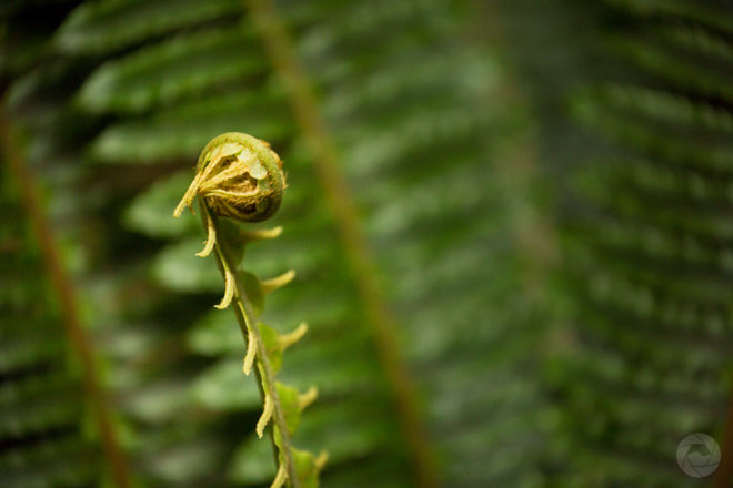 Fern frond in native forest, Catlins, New Zealand, landscape format