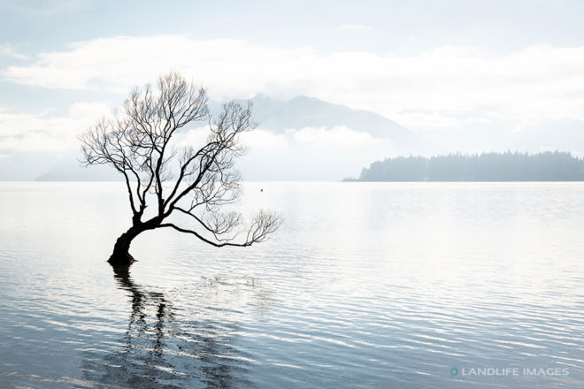 That Wanaka Tree, Landscape, Muted Tones, Wanaka, New Zealand