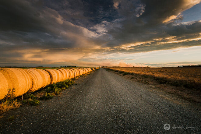 Line of haybales along farm lane at sunset, Methven, New Zealand