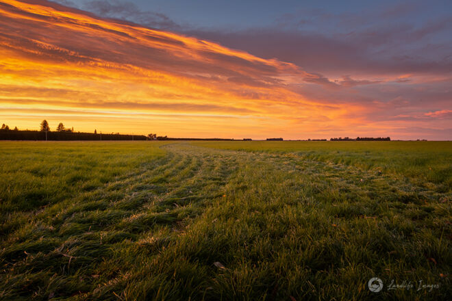 Sunrise grassy paddock, Methven, Canterbury, New Zealand