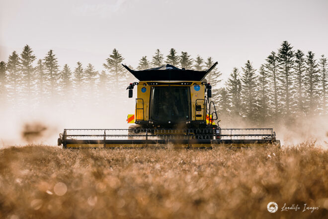 Harvester harvesting radish, Methven, Canterbury, New Zealand