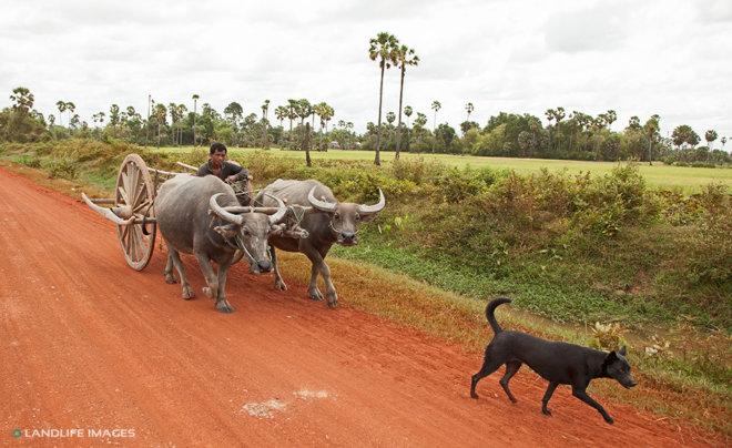 On the road, Vietnam