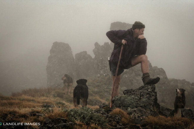 Misty Contemplation, North Canterbury High Country, New Zealand
