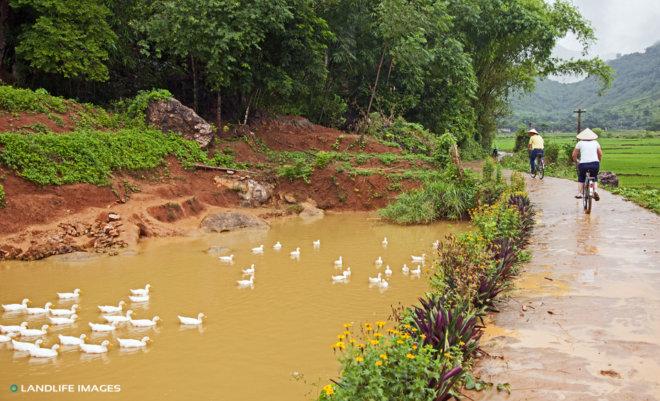 Biking to the rice fields, Vietnam