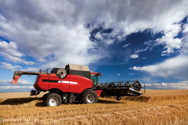 Harvest, Methven New Zealand
