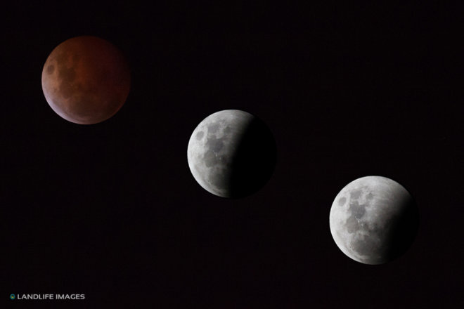 Blood Moon Composite as seen from Christchurch, New Zealand