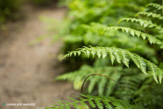 Fern along walking track, North Canterbury, New Zealand