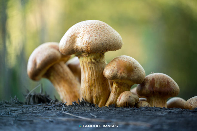 Toadstool family (landscape)