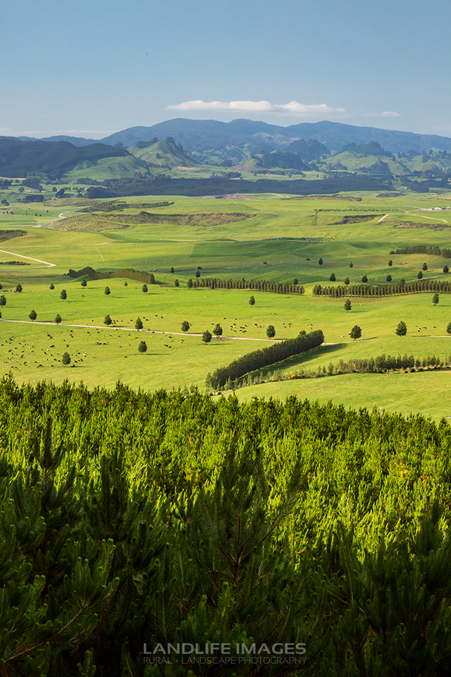 Farmland views, Taupo, New Zealand