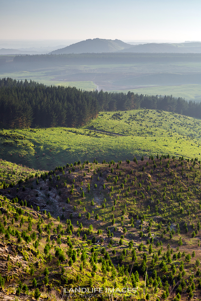 Farmland and forestry, Taupo, New Zealand