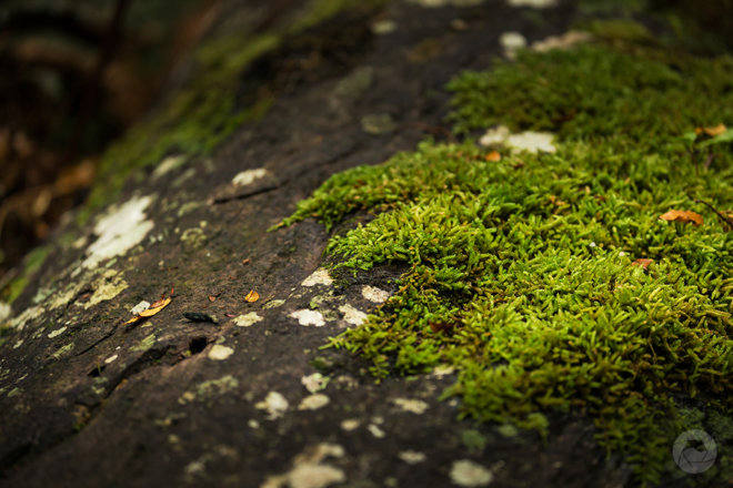Moss laden log in native forest, Catlins, New Zealand