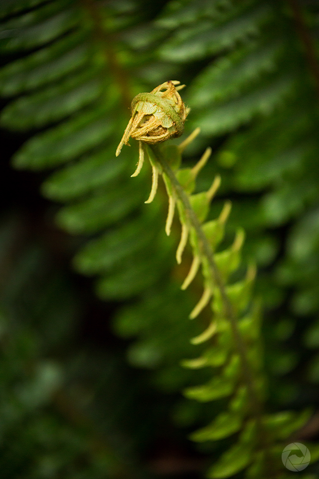 Fern frond in native forest, Catlins, New Zealand, portrait