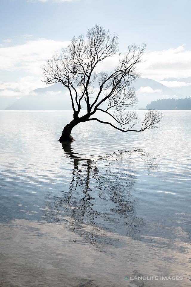 That Wanaka Tree, Portrait, Muted Tones, Wanaka, New Zealand
