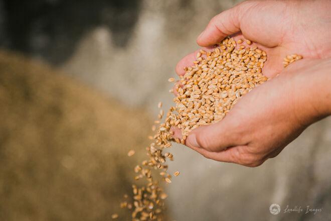 Hands with grain
