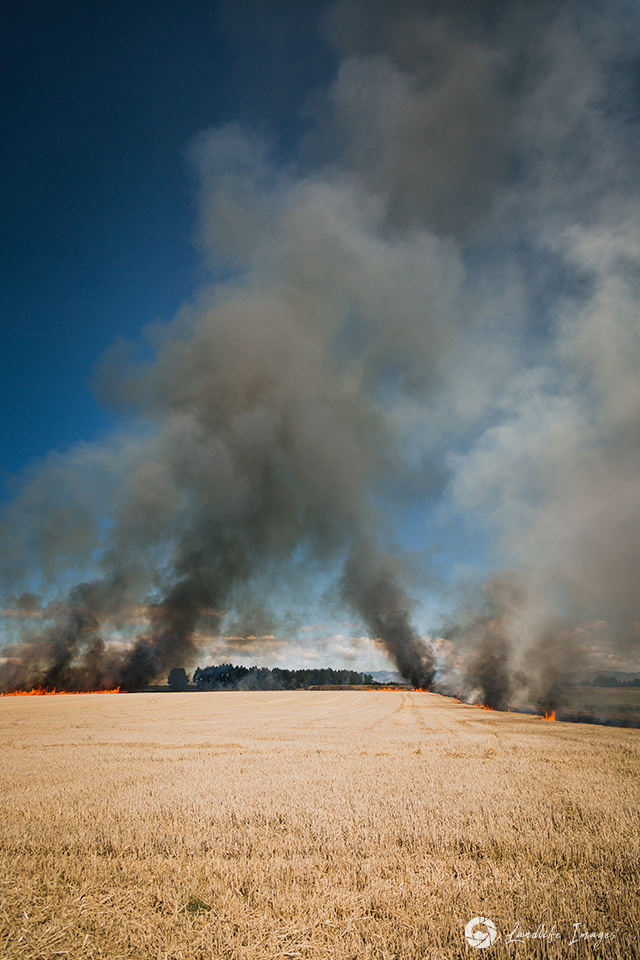 Controlled burnoff of wheat paddock, Canterbury, New Zealand