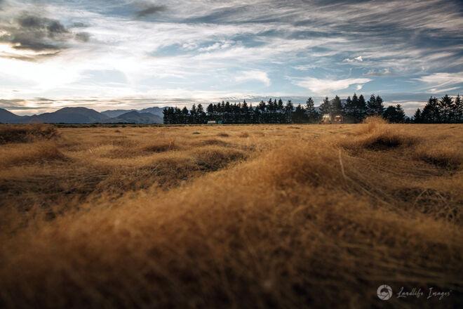 Two harvesters harvesting brown top, Methven, Canterbury, New Zealand