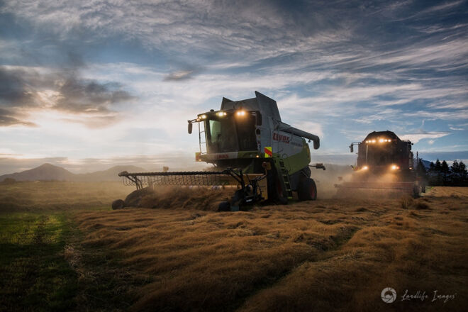 Two harvesters harvesting brown top at sunset, Methven, Canterbury, New Zealand