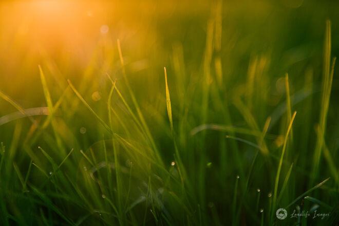 Grass at sunrise - landscape dimensions