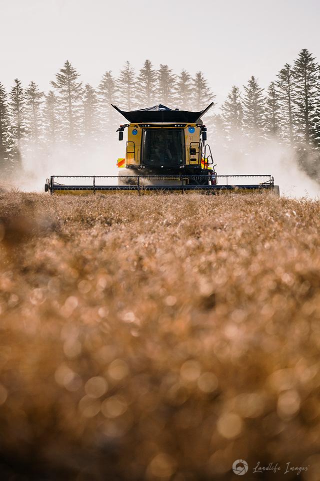 Harvester harvesting radish, Methven, Canterbury, New Zealand - portrait dimensions