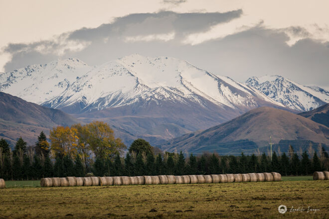Hay bale line up, stored for winter stock grazing, Methven, Canterbury